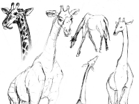 animals3